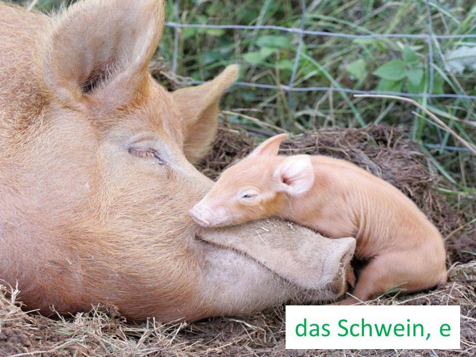 das Schwein, e