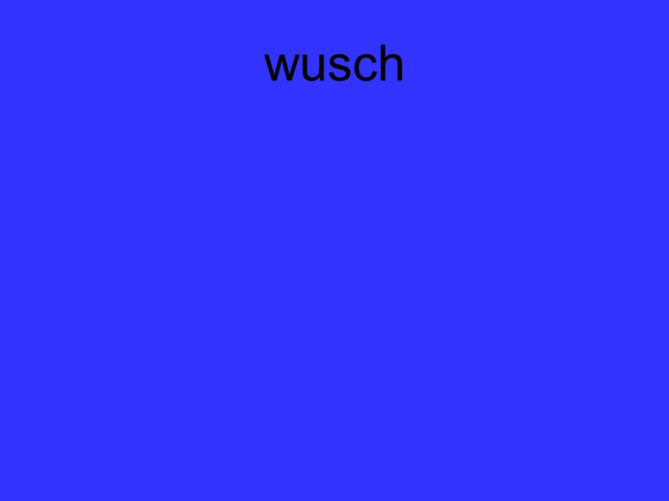wusch