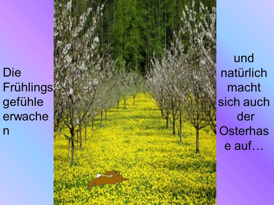 und natürlich macht sich auch der Osterhas e auf… Die Frühlings gefühle erwache n