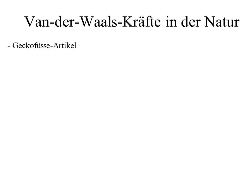 Van-der-Waals-Kräfte in der Natur - Geckofüsse-Artikel