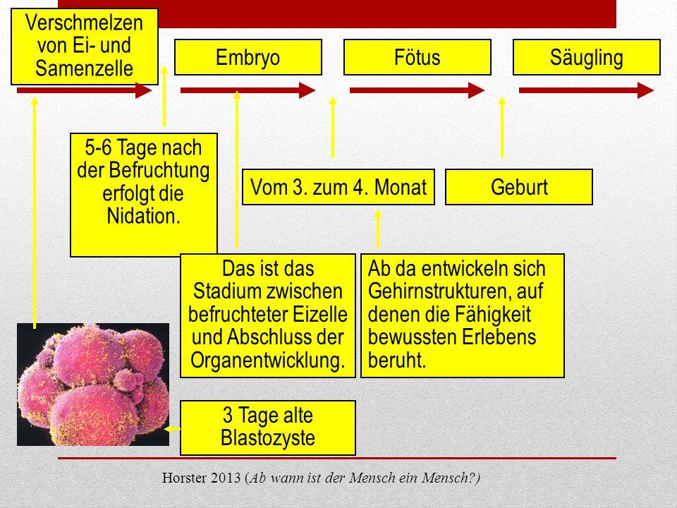 Verschmelzen von Ei- und Samenzelle EmbryoFötusSäugling 5-6 Tage nach der Befruchtung erfolgt die Nidation. Vom 3. zum 4. MonatGeburt Das ist das Stad