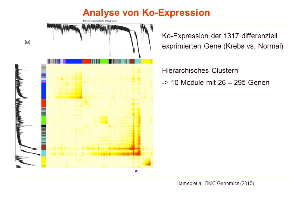 9.Vorlesung WS 2015/16Softwarewerkzeuge35 Analyse von Ko-Expression Hamed et al.