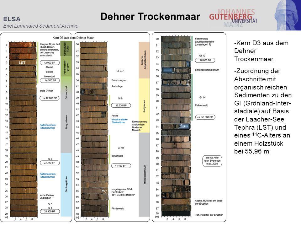 ELSA Eifel Laminated Sediment Archive Dehner Trockenmaar -Kern D3 aus dem Dehner Trockenmaar. -Zuordnung der Abschnitte mit organisch reichen Sediment