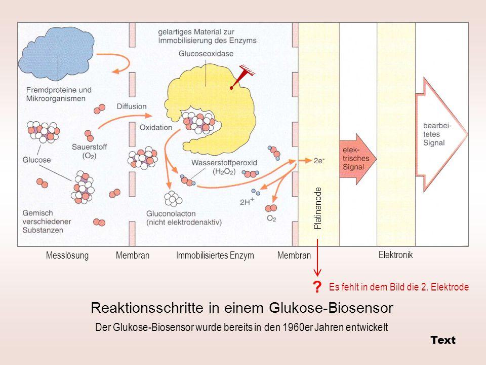 Messlösung Platinanode Elektronik Immobilisiertes Enzym Membran Reaktionsschritte in einem Glukose-Biosensor ? Der Glukose-Biosensor wurde bereits in