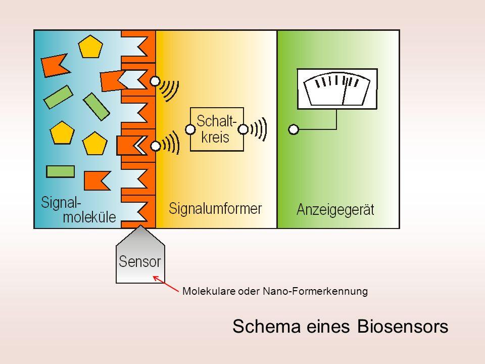 Schema eines Biosensors Molekulare oder Nano-Formerkennung