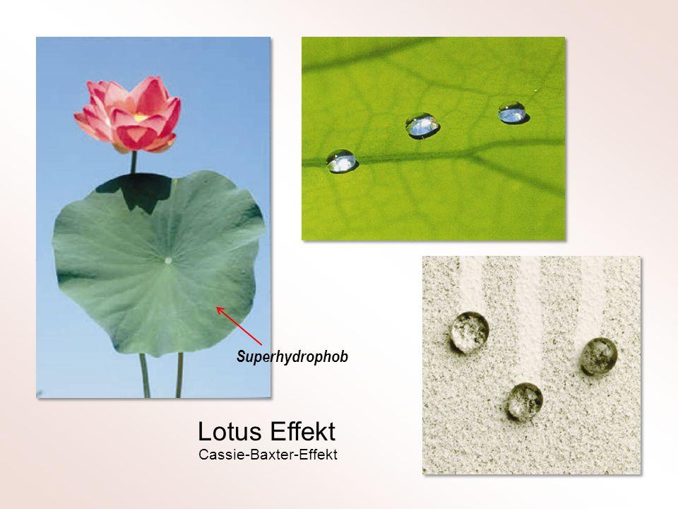 Lotus Effekt Superhydrophob Cassie-Baxter-Effekt
