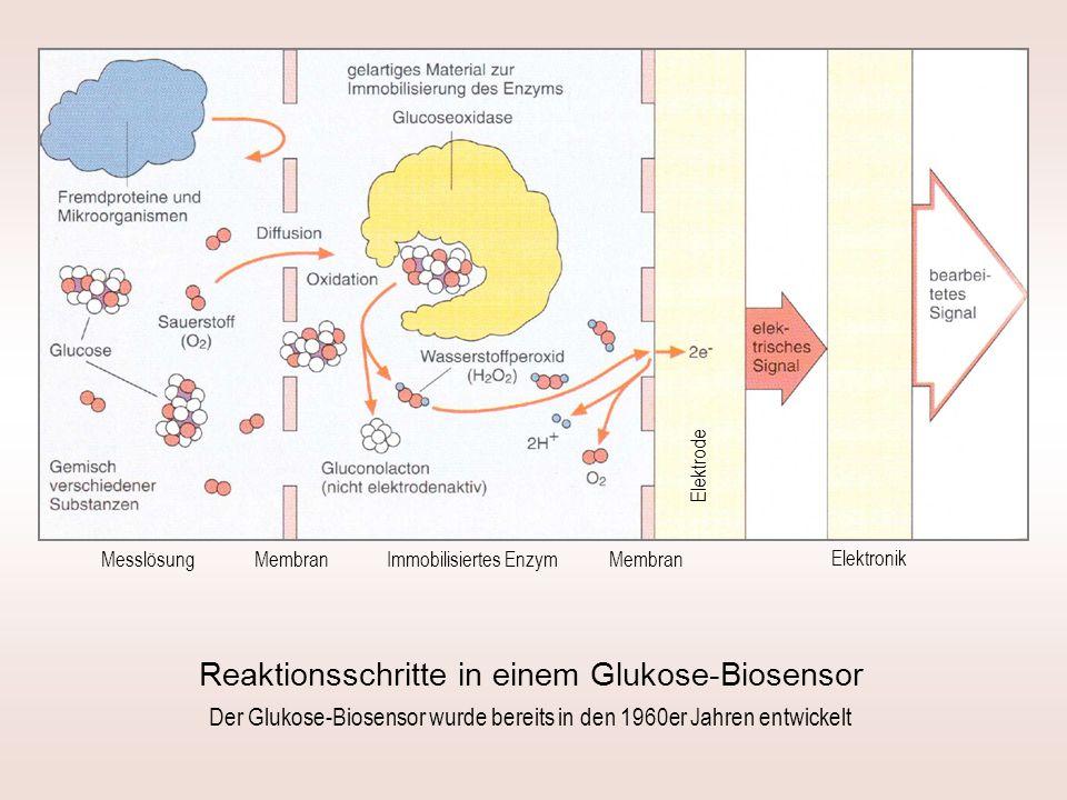 Messlösung Elektrode Elektronik Immobilisiertes Enzym Membran Reaktionsschritte in einem Glukose-Biosensor Der Glukose-Biosensor wurde bereits in den