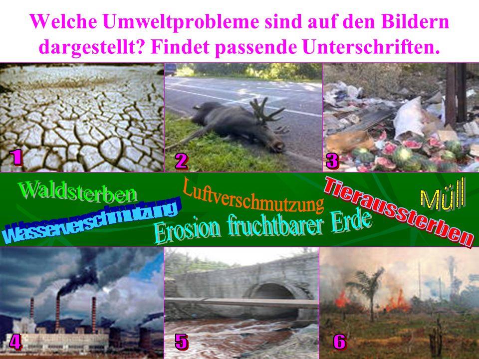 Welche Umweltprobleme sind auf den Bildern dargestellt Findet passende Unterschriften.