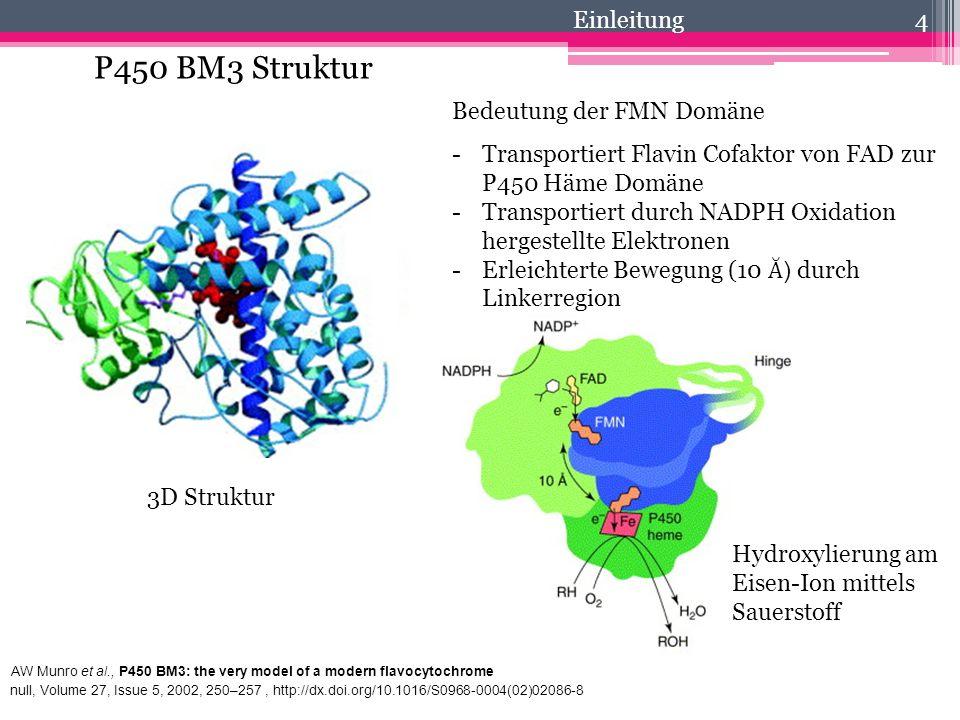 P450 BM3 Struktur 4 3D Struktur AW Munro et al., P450 BM3: the very model of a modern flavocytochrome null, Volume 27, Issue 5, 2002, 250–257, http://