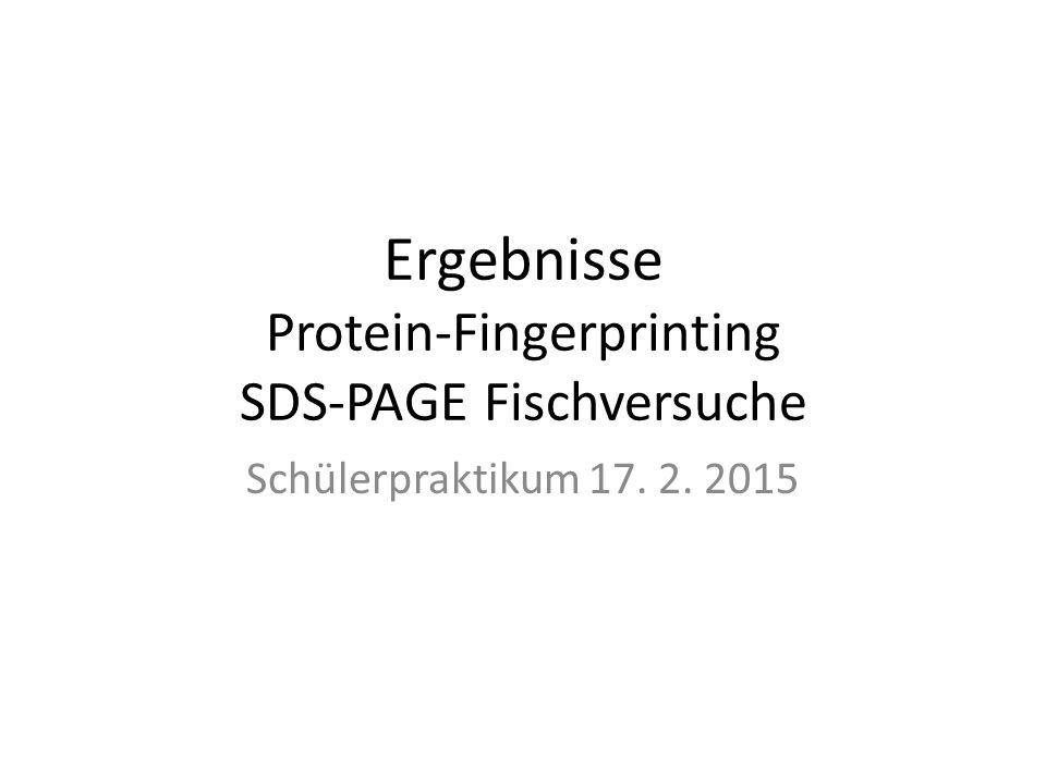 Ergebnisse Protein-Fingerprinting SDS-PAGE Fischversuche Schülerpraktikum 17. 2. 2015