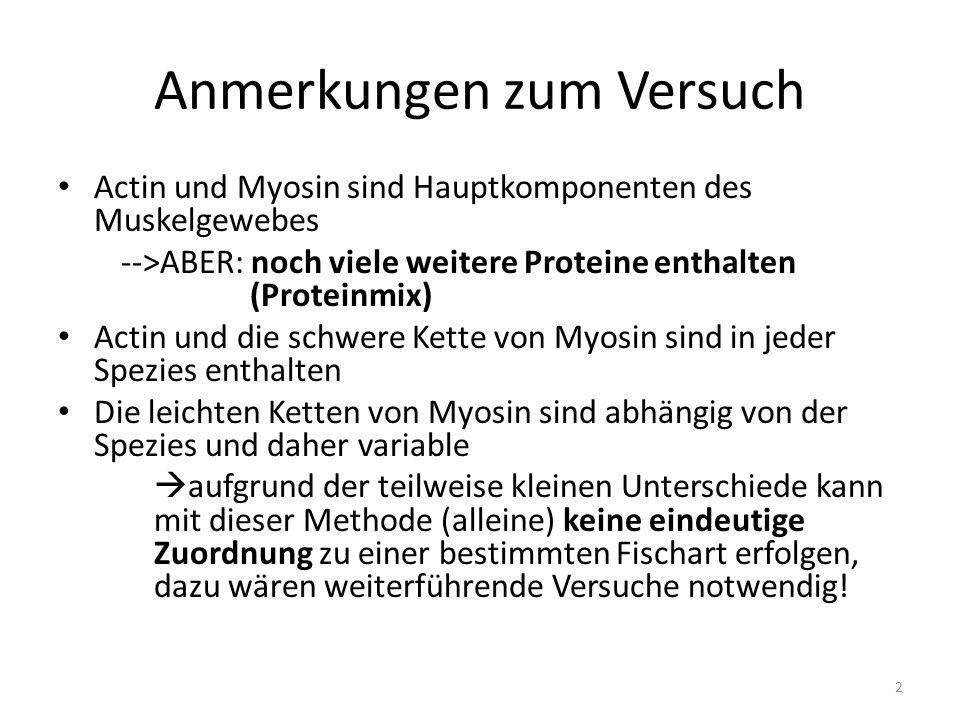 Anmerkungen zum Versuch 2 Actin und Myosin sind Hauptkomponenten des Muskelgewebes -->ABER: noch viele weitere Proteine enthalten (Proteinmix) Actin u