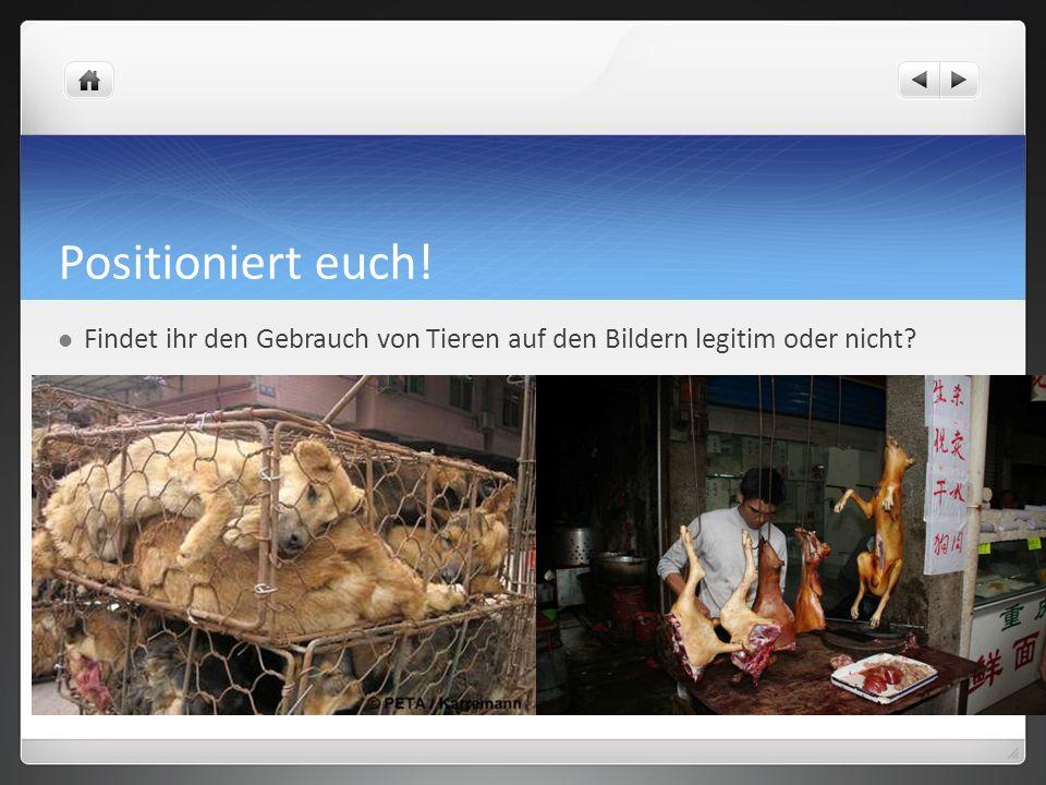 Positioniert euch! Findet ihr den Gebrauch von Tieren auf den Bildern legitim oder nicht?