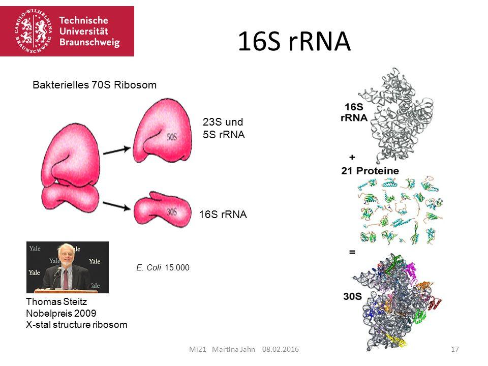 16S rRNA Mi21 Martina Jahn 08.02.201617 23S und 5S rRNA 16S rRNA Bakterielles 70S Ribosom E.