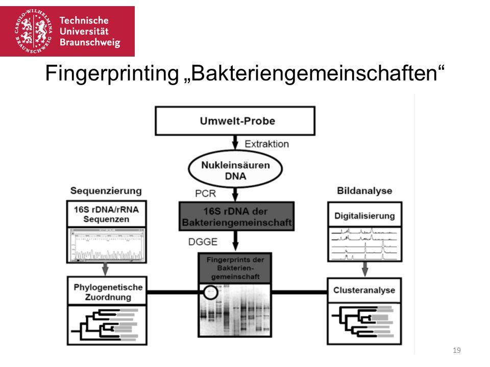 """Fingerprinting """"Bakteriengemeinschaften Mi21 Martina Jahn 08.02.201619"""