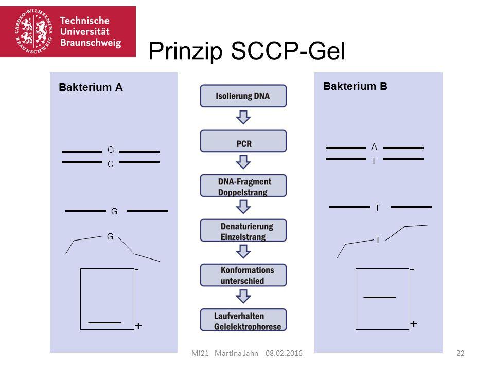 Prinzip SCCP-Gel Mi21 Martina Jahn 08.02.201622 GCGC G G + - ATAT T T + - Bakterium A Bakterium B