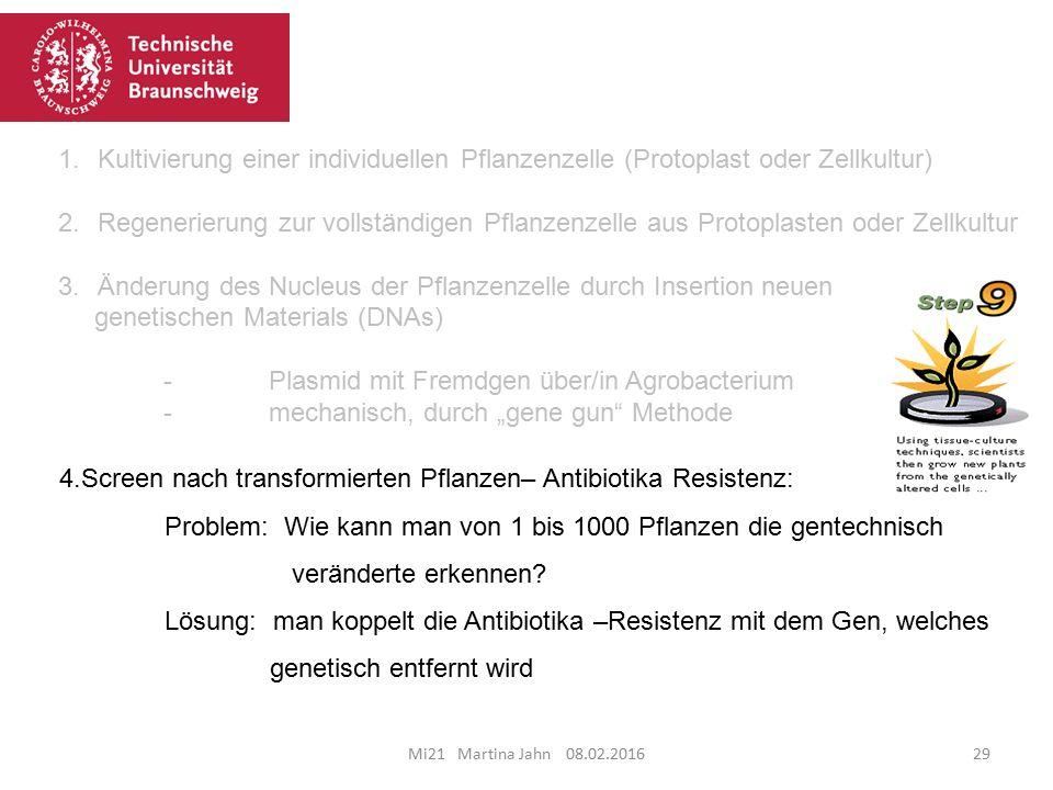 Mi21 Martina Jahn 08.02.201629 4.Screen nach transformierten Pflanzen– Antibiotika Resistenz: Problem: Wie kann man von 1 bis 1000 Pflanzen die gentechnisch veränderte erkennen.