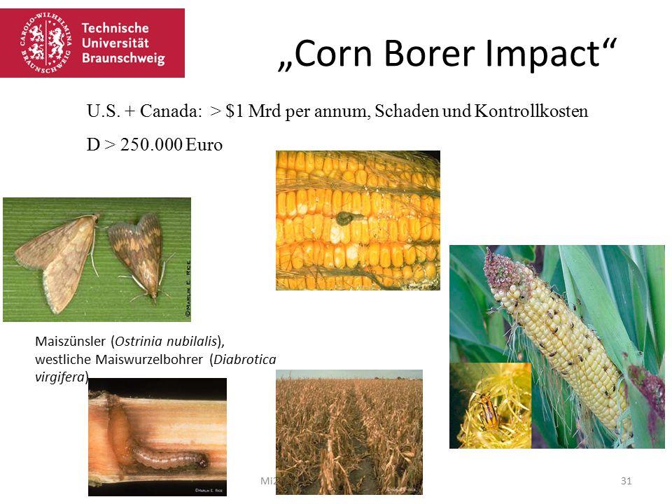 """Corn Borer Impact Mi21 Martina Jahn 08.02.201631 U.S."