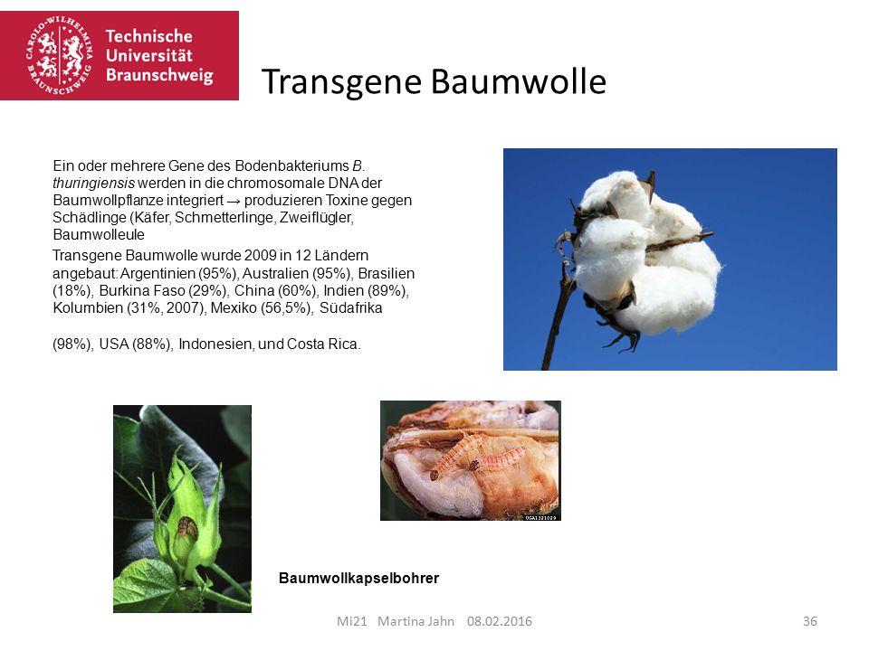 Mi21 Martina Jahn 08.02.201636 Transgene Baumwolle Ein oder mehrere Gene des Bodenbakteriums B.