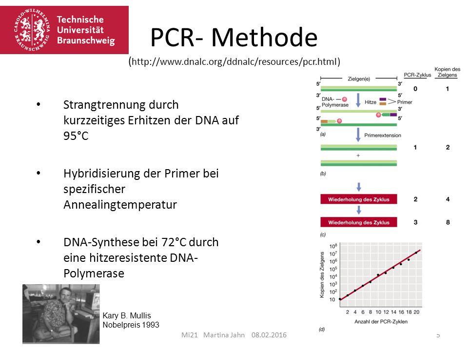 Mi21 Martina Jahn 08.02.20165 5 Strangtrennung durch kurzzeitiges Erhitzen der DNA auf 95°C Hybridisierung der Primer bei spezifischer Annealingtemperatur DNA-Synthese bei 72°C durch eine hitzeresistente DNA- Polymerase Kary B.