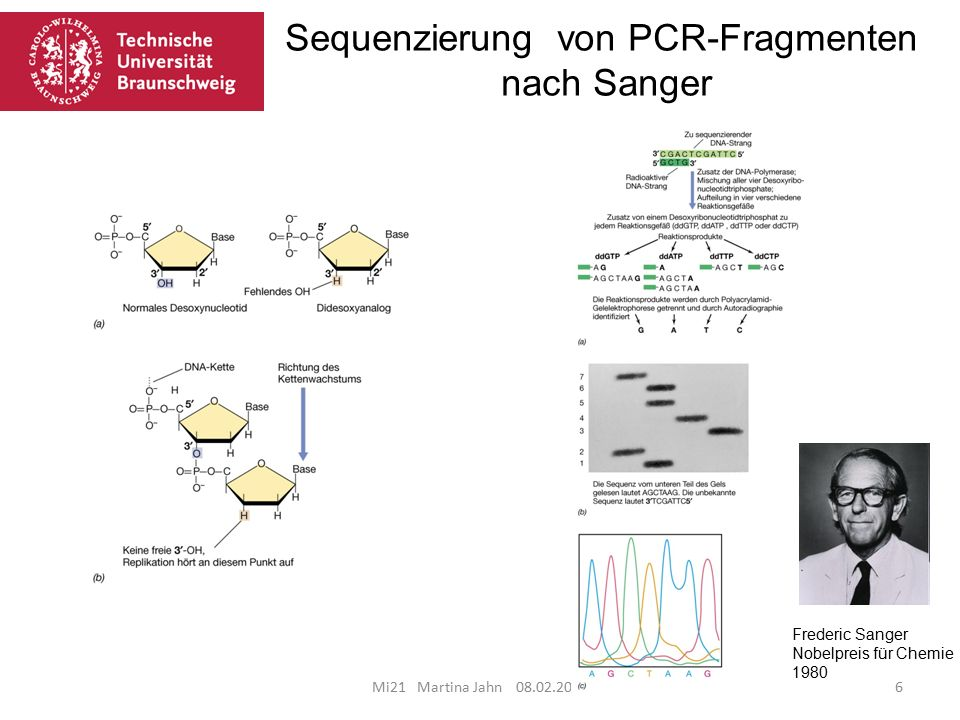 Mi21 Martina Jahn 08.02.201627 Insertion neuen Genetischen Materials Über Agrobacterium