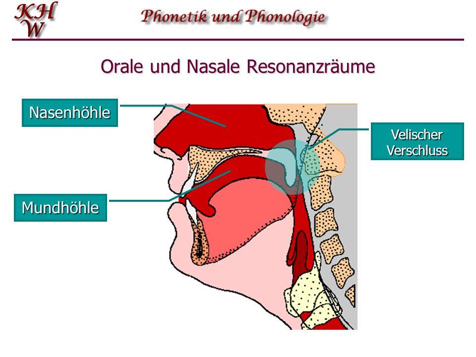 Orale und Nasale Resonanzräume Mundhöhle Nasenhöhle Velischer Verschluss