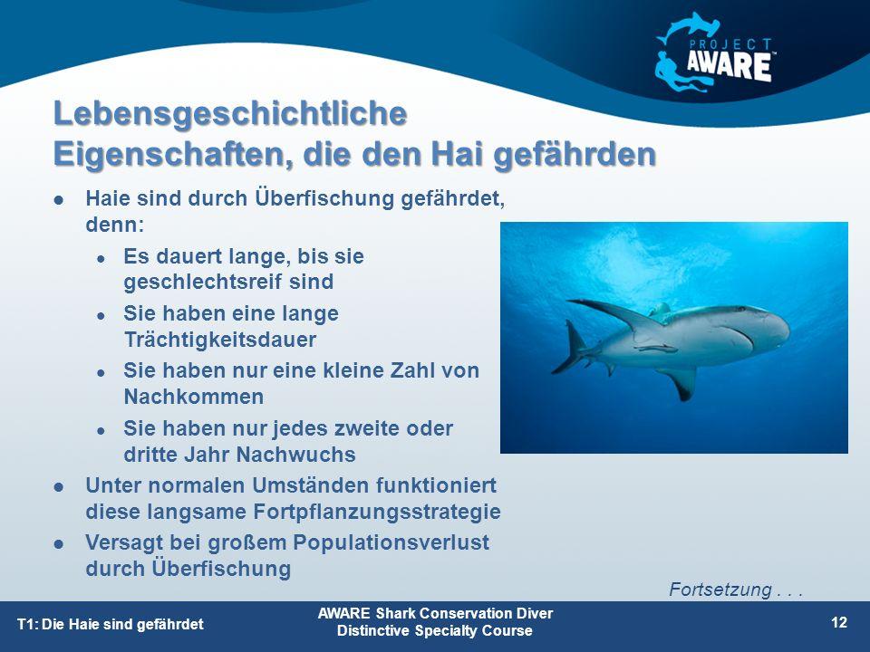 Lebensgeschichtliche Eigenschaften, die den Hai gefährden Haie sind durch Überfischung gefährdet, denn: Es dauert lange, bis sie geschlechtsreif sind