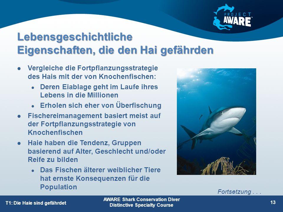 Vergleiche die Fortpflanzungsstrategie des Hais mit der von Knochenfischen: Deren Eiablage geht im Laufe ihres Lebens in die Millionen Erholen sich eh