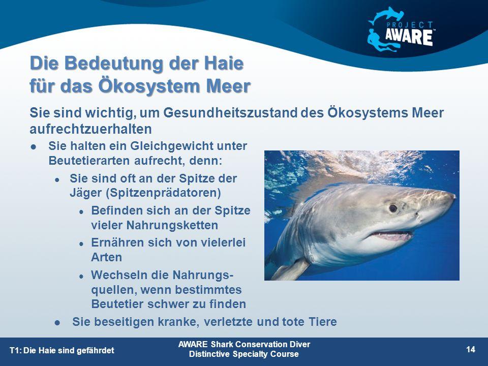 Die Bedeutung der Haie für das Ökosystem Meer Sie halten ein Gleichgewicht unter Beutetierarten aufrecht, denn: Sie sind oft an der Spitze der Jäger (