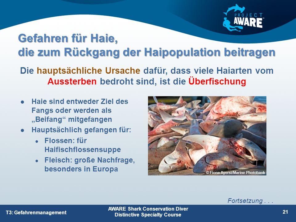 """Gefahren für Haie, die zum Rückgang der Haipopulation beitragen Haie sind entweder Ziel des Fangs oder werden als """"Beifang"""" mitgefangen Hauptsächlich"""