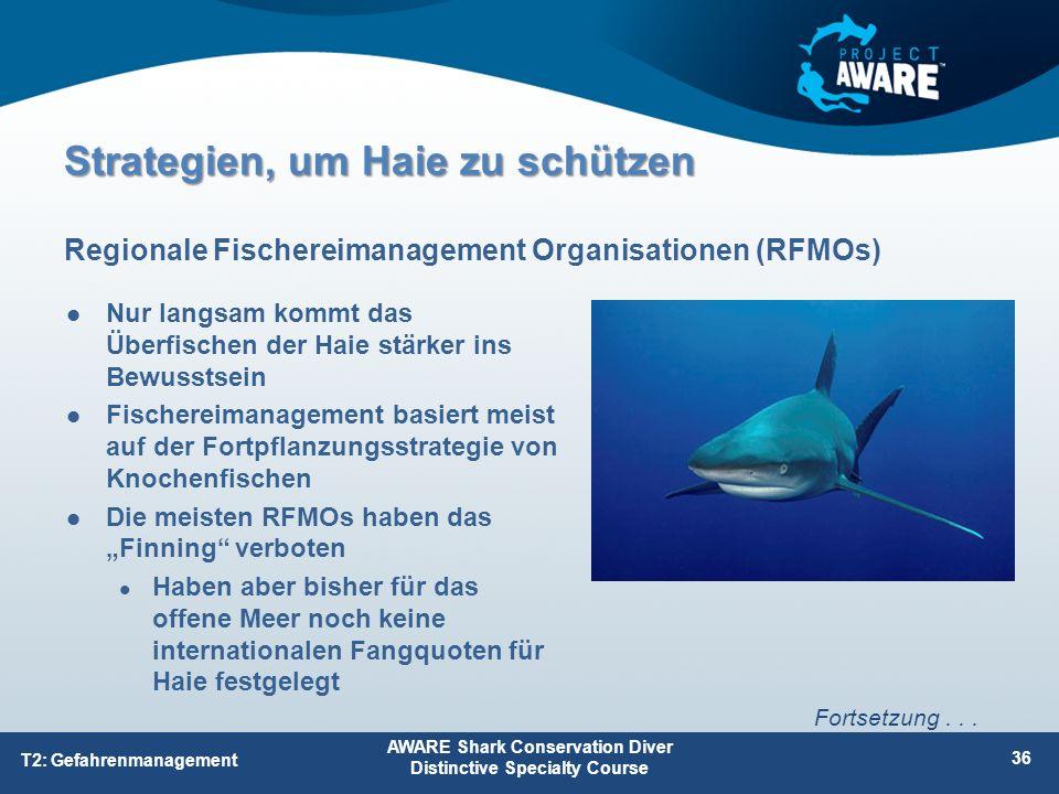 Nur langsam kommt das Überfischen der Haie stärker ins Bewusstsein Fischereimanagement basiert meist auf der Fortpflanzungsstrategie von Knochenfische