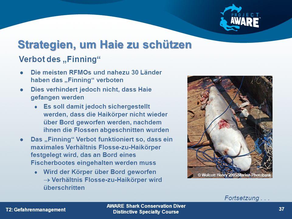 """Die meisten RFMOs und nahezu 30 Länder haben das """"Finning"""" verboten Dies verhindert jedoch nicht, dass Haie gefangen werden Es soll damit jedoch siche"""