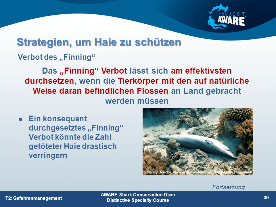 "Ein konsequent durchgesetztes ""Finning Verbot könnte die Zahl getöteter Haie drastisch verringern AWARE Shark Conservation Diver Distinctive Specialty Course 39 T2: Gefahrenmanagement Fortsetzung..."