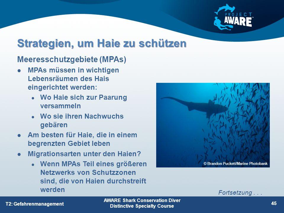 MPAs müssen in wichtigen Lebensräumen des Hais eingerichtet werden: Wo Haie sich zur Paarung versammeln Wo sie ihren Nachwuchs gebären Am besten für H