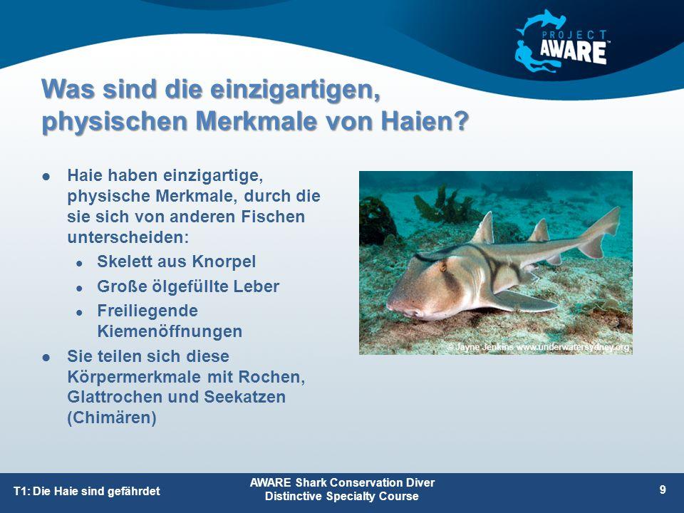 Verlust von Lebensraum 75% der Riffe weltweit durch die Auswirkungen örtlicher Entwicklungen und Klimaveränderungen gefährdet 1/5 aller Mangroven seit 1980 weltweit verschwunden Küstenentwicklung Zerstört den Lebensraum der Haie und die Aufwuchsgebiete der Jungtiere Andere Ursachen AWARE Shark Conservation Diver Distinctive Specialty Course 30 T2: Gefahrenmanagement Gefahren für Haie, die zum Rückgang der Haipopulation beitragen