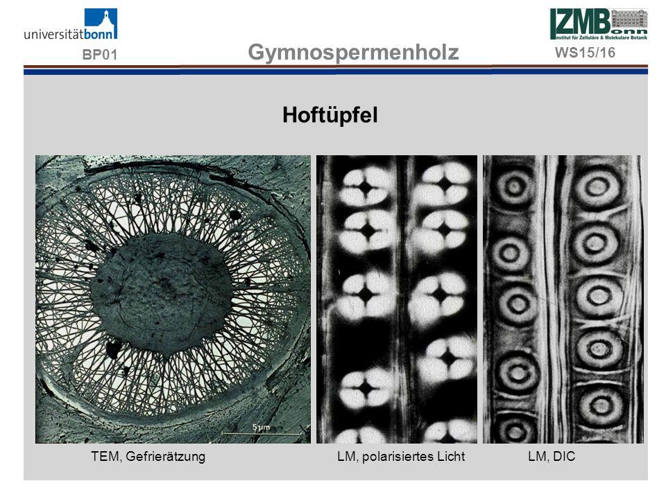 BP01 Gymnospermenholz Hoftüpfel TEM, Gefrierätzung LM, polarisiertes LichtLM, DIC WS15/16