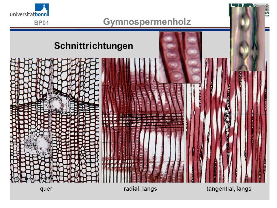 BP01 Gymnospermenholz quer radial, längs tangential, längs Raven et al. 1999 Schnittrichtungen WS13/14