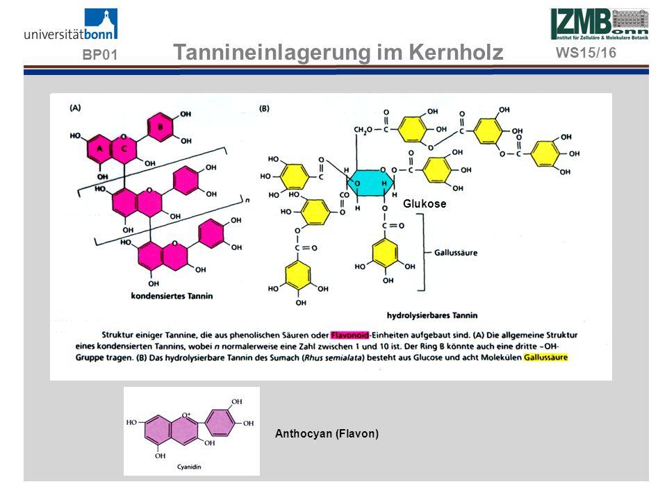 BP01 Tannineinlagerung im Kernholz Anthocyan (Flavon) Glukose WS15/16