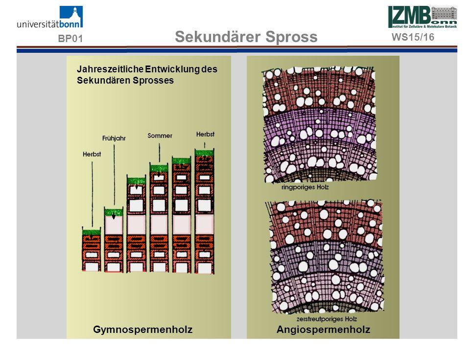 BP01 Sekundärer Spross Jahreszeitliche Entwicklung des Sekundären Sprosses GymnospermenholzAngiospermenholz WS15/16