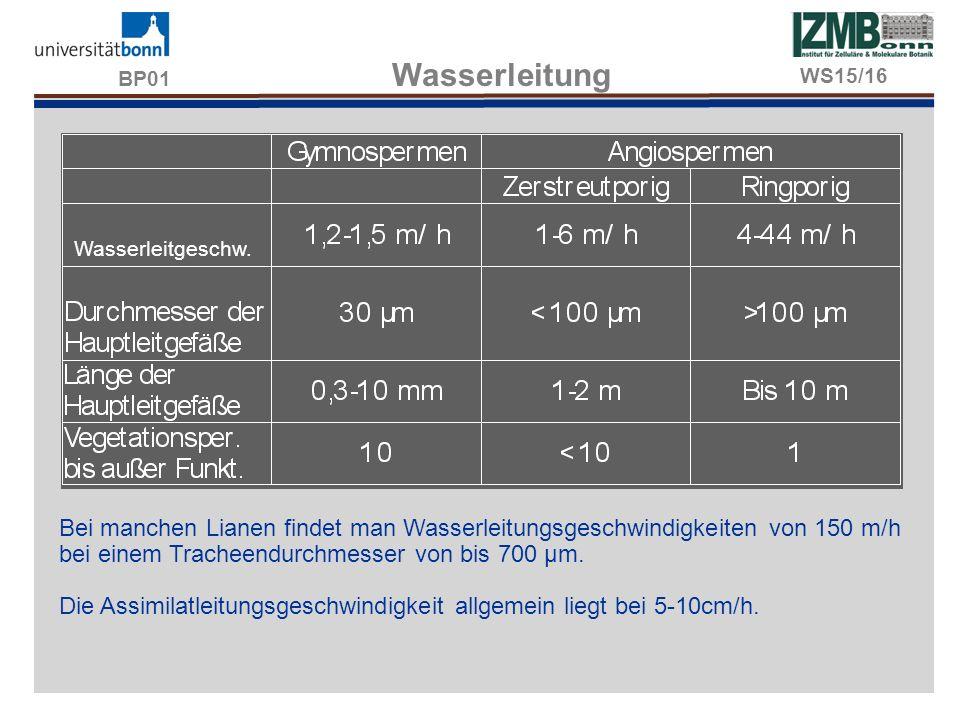 BP01 Wasserleitung Bei manchen Lianen findet man Wasserleitungsgeschwindigkeiten von 150 m/h bei einem Tracheendurchmesser von bis 700 µm. Die Assimil