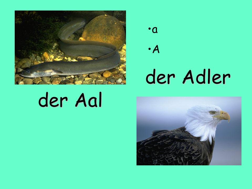 der Adler der Aal a A