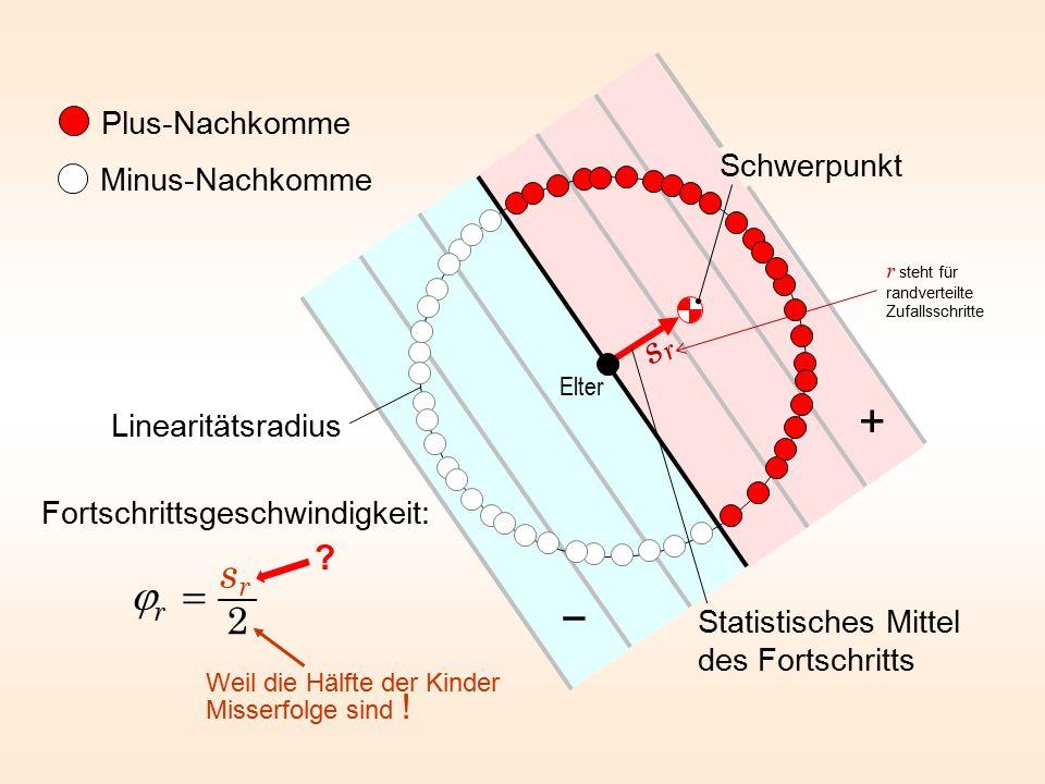 Plus-Nachkomme Minus-Nachkomme Statistisches Mittel des Fortschritts Elter Linearitätsradius Schwerpunkt + − Fortschrittsgeschwindigkeit: Weil die Häl
