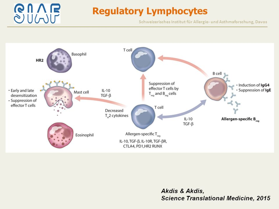 Akdis & Akdis, Science Translational Medicine, 2015 Regulatory Lymphocytes Schweizerisches Institut für Allergie- und Asthmaforschung, Davos