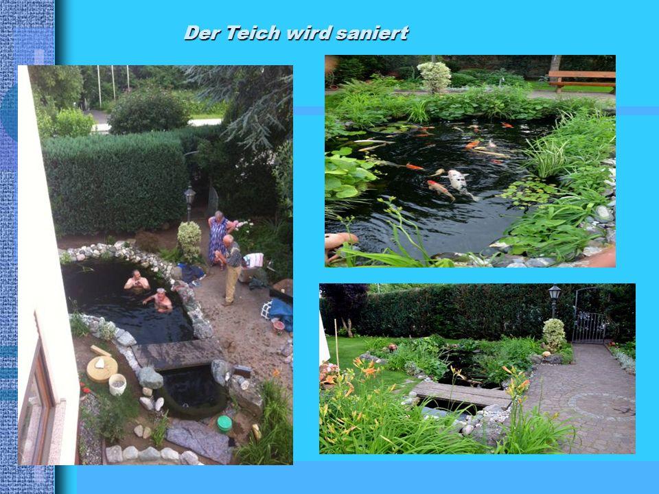 Der Teich wird saniert