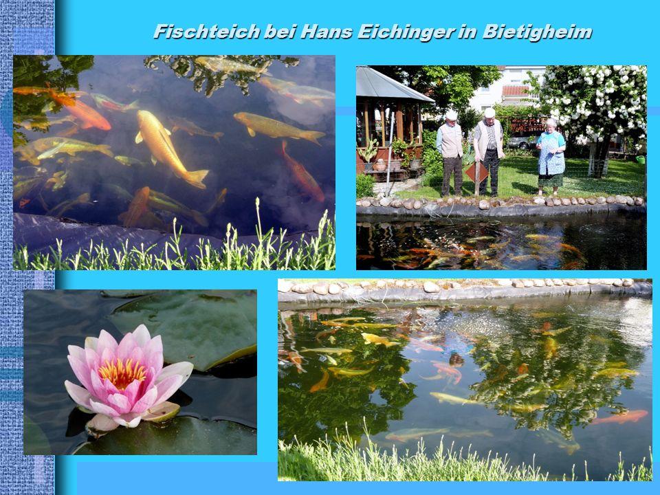Fischteich bei Hans Eichinger in Bietigheim