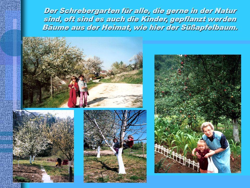 Der Schrebergarten für alle, die gerne in der Natur sind, oft sind es auch die Kinder, gepflanzt werden Bäume aus der Heimat, wie hier der Süßapfelbaum.