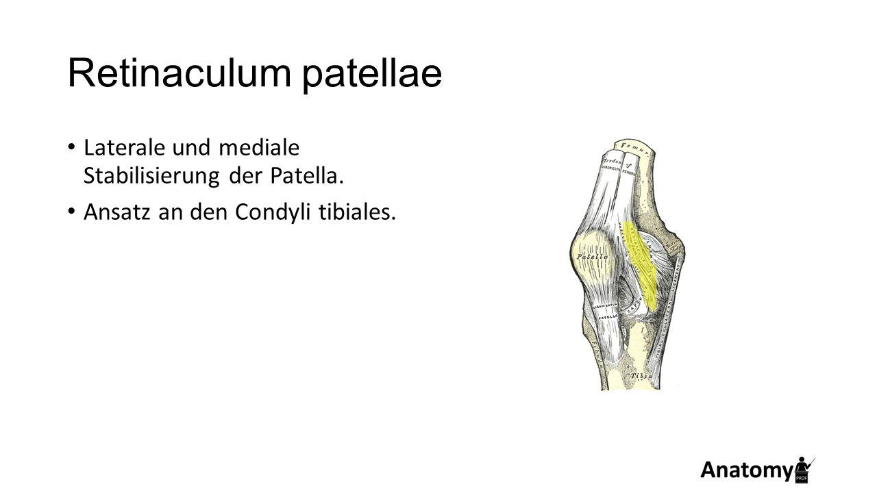 Retinaculum patellae Laterale und mediale Stabilisierung der Patella. Ansatz an den Condyli tibiales.