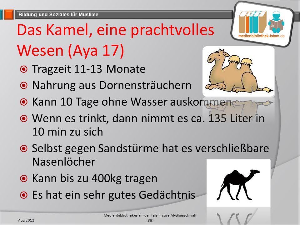 Das Kamel, eine prachtvolles Wesen (Aya 17)  Tragzeit 11-13 Monate  Nahrung aus Dornensträuchern  Kann 10 Tage ohne Wasser auskommen  Wenn es trinkt, dann nimmt es ca.
