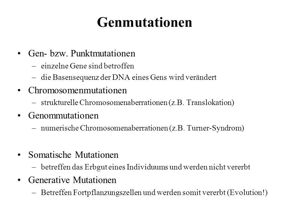 Proteinbiosynthese Transkription –Entspiralisieren der DNA-Helix –Enzym öffnet H-Brücken –Komplementäre RNA-Nucleotide lagern sich an –RNS-Polymerase