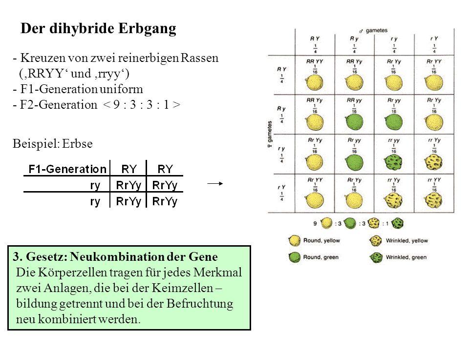 Intermediäre Genwirkung: - Sonderform des monohybriden Erbgangs - alle Individuen der F1-Generation gleich - Verhältnis in der F1-Generation von 1:2:1