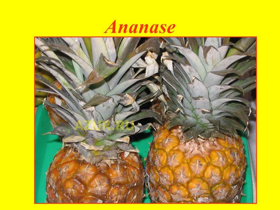 Ananase